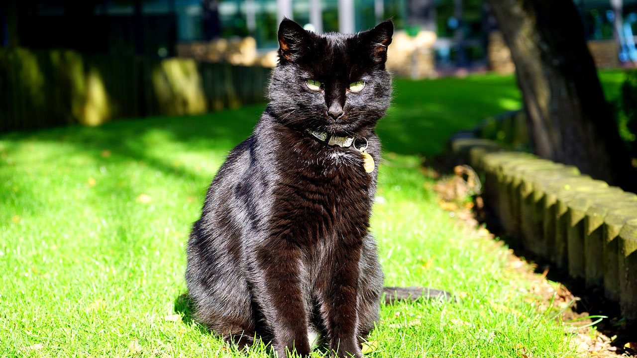 Black Cat sitting on the grass